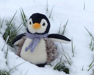 penguin-1200535_640